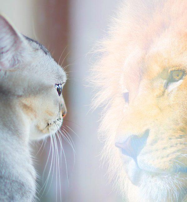 Come aumentare l'autostima: gatto si guarda allo specchio e si vede un leone