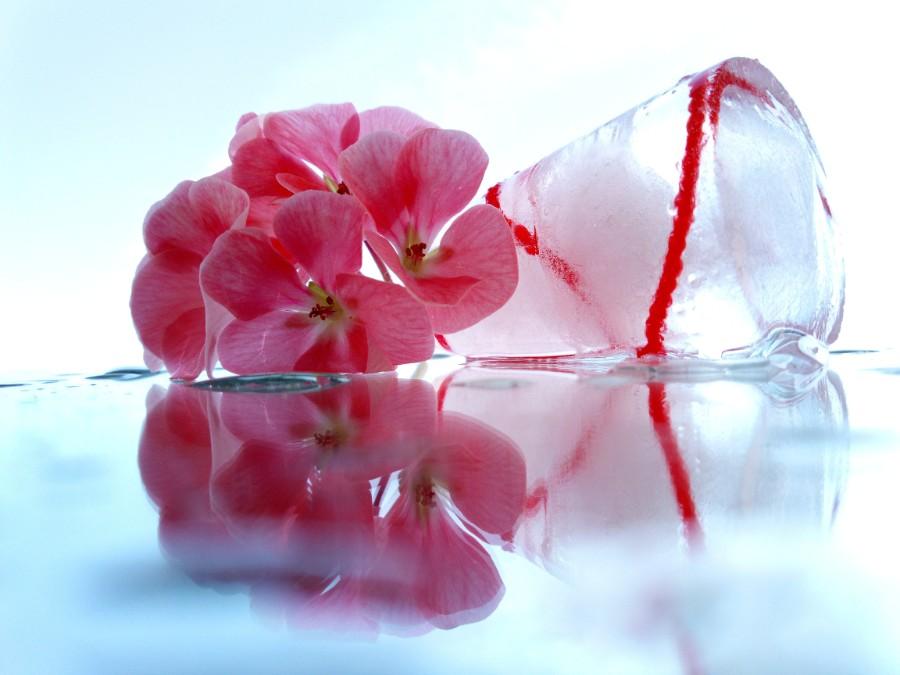 fiorellini accanto a un cubetto di ghiaccio