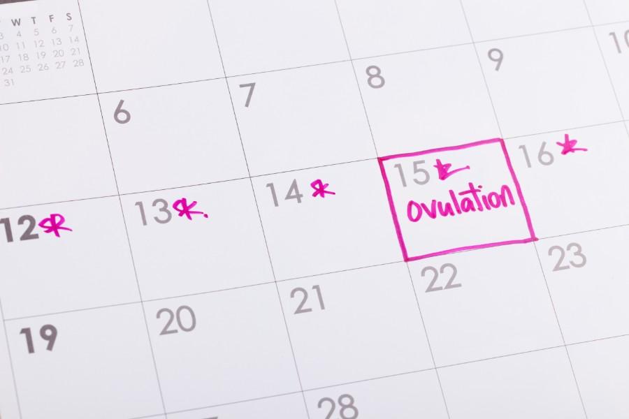 Calendario con segnati i giorni del periodo fertile