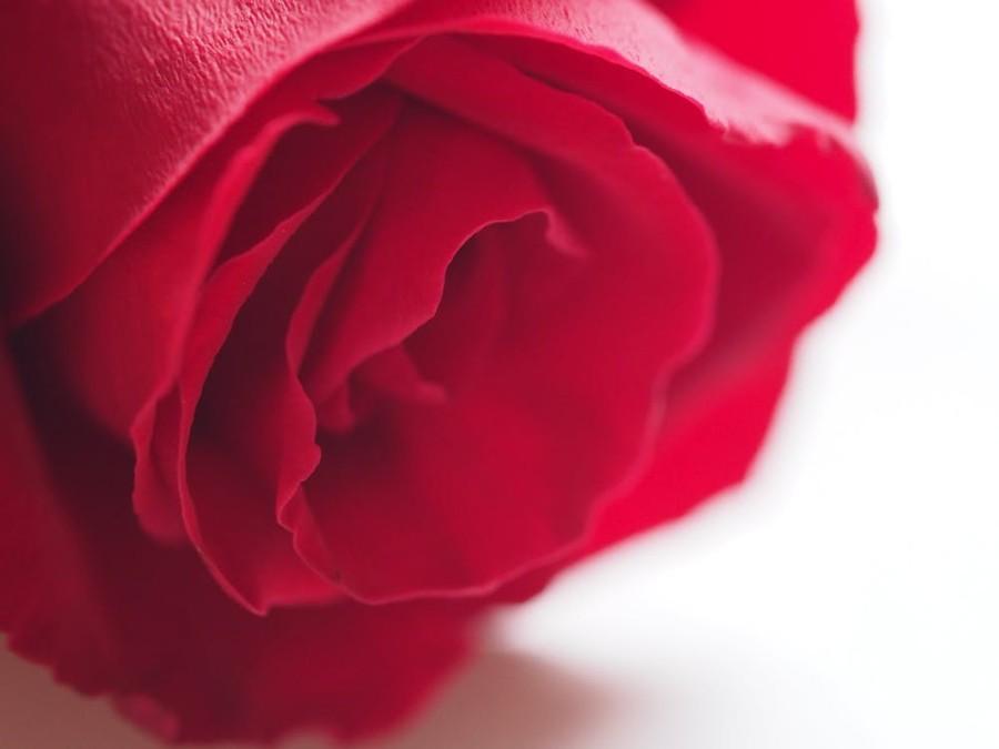 Problemi intimi femminili: una rosa rossa