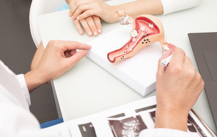 Ginecologa mostra a paziente un modellino di utero