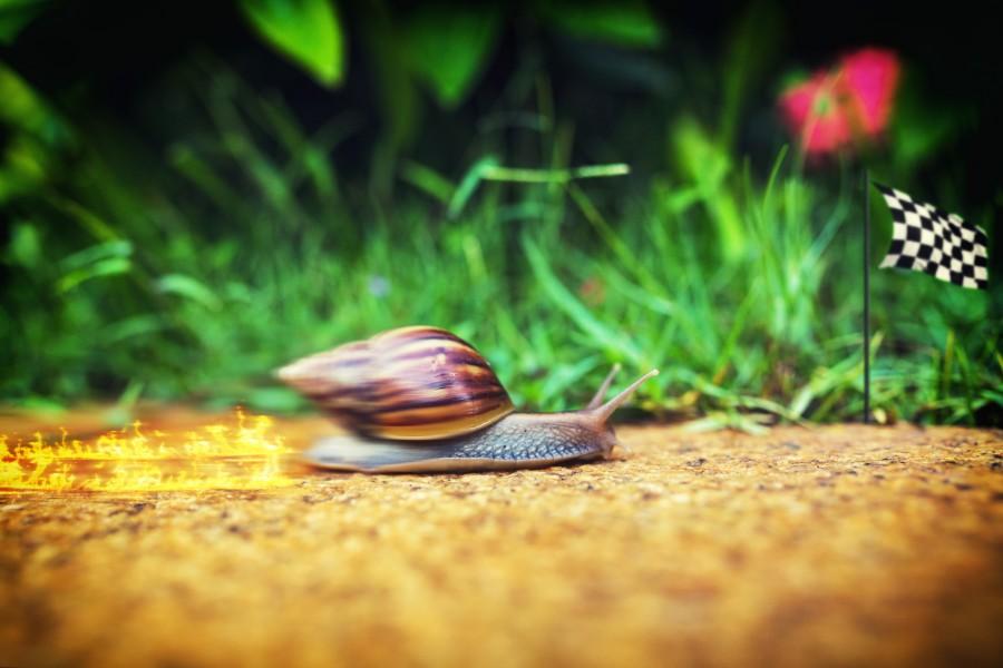 Una lumaca corre velocemente verso il traguardo
