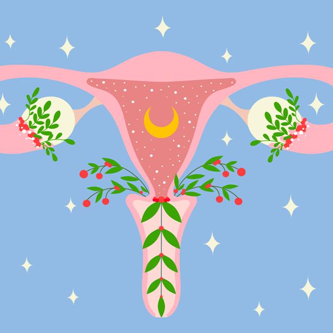 Questionario sulla fertilità femminile - illustrazione rappresentante apparato riproduttivo femminile.