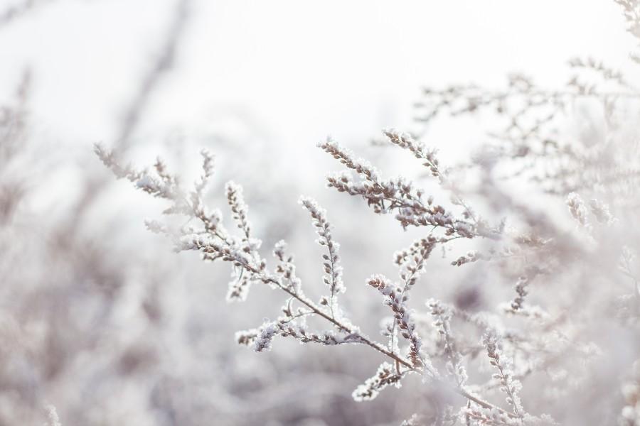 Prepararsi ad affrontare l'inverno: nell'immagine rami innevati.