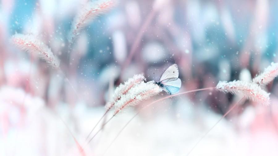 Egg Freezing concept: farfalla posata su ramo con brina