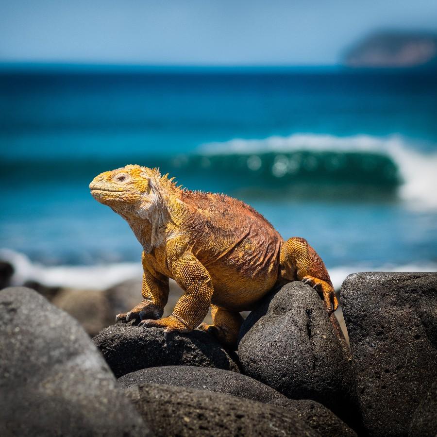 Luoghi da visitare almeno una volta nella vita: animale tropicale - Foto di Simon Matzinger da Pexels